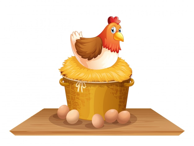Kura w gnieździe kurczaka