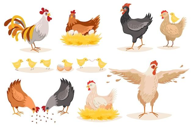 Kurczak i koguty na białym tle. ptactwo z pisklętami i jajami w gnieździe, ptaki domowe na fermie drobiu