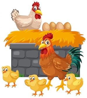 Kurczaki i jajka na białym tle