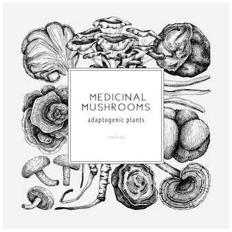 Kwadratowy projekt grzybów leczniczych ręcznie naszkicowana rama roślin adaptogennych