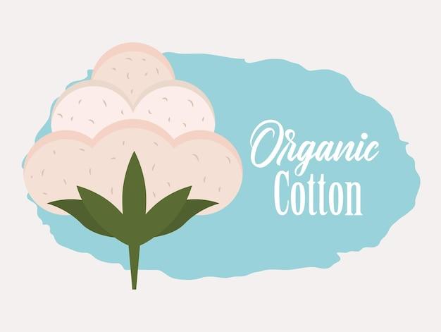 Kwiat bawełny organicznej