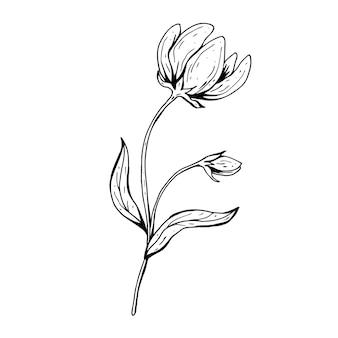 Kwiat bazgroły. ręcznie rysowane ilustracja. szkic tuszem monochromatyczne czarno-białe. grafika liniowa. kolorowanka.