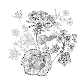 Kwiat bodziszka. odosobniony bukiet na białym tle.