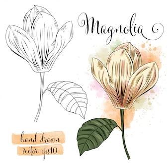 Kwiat botaniczny akwarela magnolia
