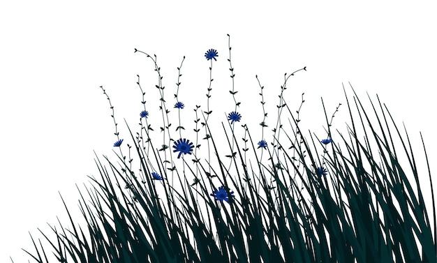 Kwiat cykorii i gałęzie z trawy na białym tle. ilustracja wektorowa.