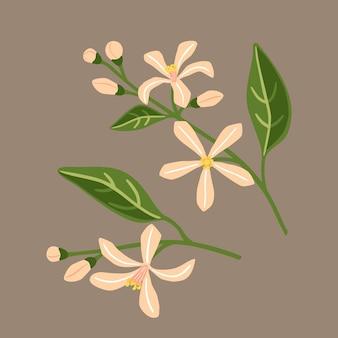 Kwiat cytryny. gałęzie z różowymi kwiatami.ilustracja wektorowa