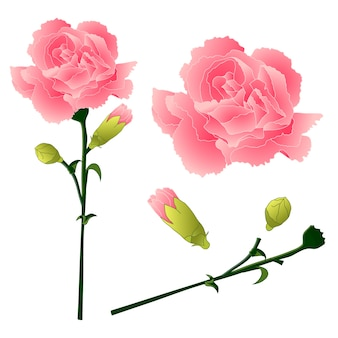 Kwiat goździka