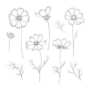 Kwiat jaskier na białym tle.