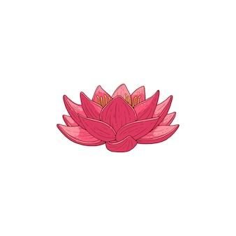 Kwiat lotosu różowy kwiat, ilustracja kreskówka na białym tle