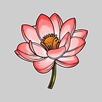 Kwiat lotosu wektor ilustracja na białym tle