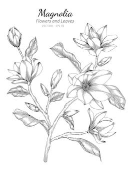 Kwiat magnolii i liść rysunek ilustracja z grafiką liniową na białym tle