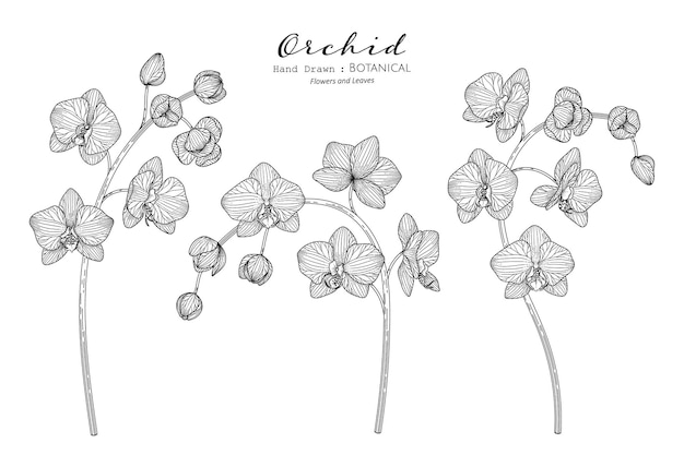 Kwiat orchidei i liść ręcznie rysowane ilustracja botaniczna z grafiką.