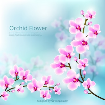 Kwiat orchidei piękne tło