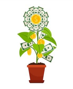 Kwiat pieniądze na białym tle