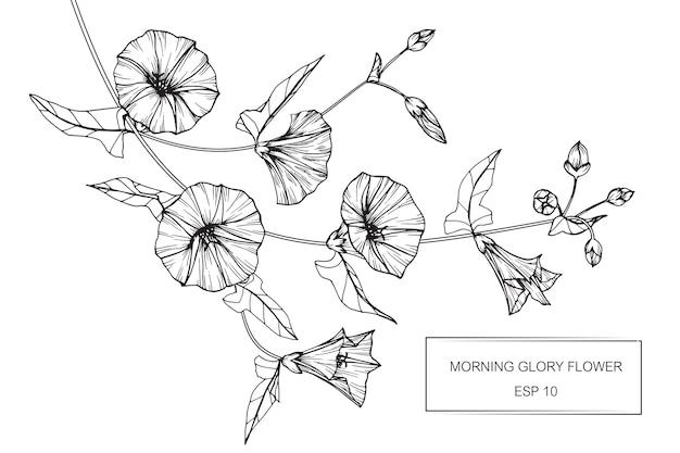 Kwiat rannej sławy