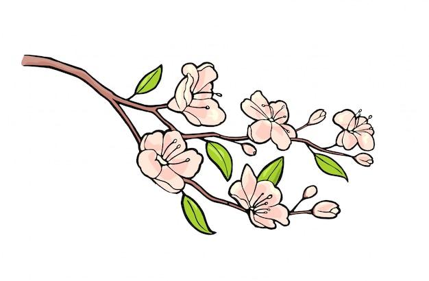 Kwiat sakury. wiśni gałąź z kwiatami i pączkiem. płatki spadają.
