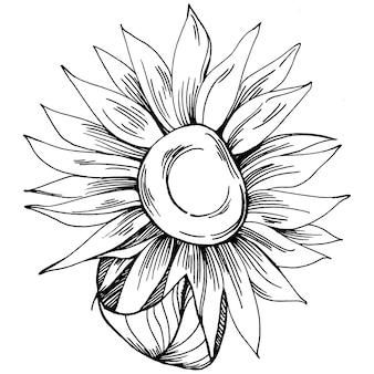 Kwiat słonecznika. kwiatowy kwiat botaniczny. element ilustracji na białym tle. wektor rysunek wildflower dla tła, tekstury, wzór opakowania, ramki lub obramowania.