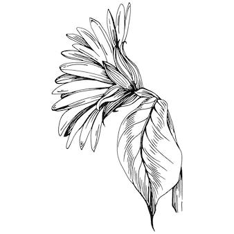 Kwiat Słonecznika. Kwiatowy Kwiat Botaniczny. Element Ilustracji Na Białym Tle. Wektor Rysunek Wildflower Dla Tła, Tekstury, Wzór Opakowania, Ramki Lub Obramowania. Premium Wektorów