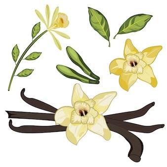 Kwiat wanilii z liści