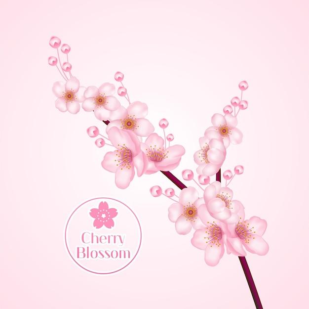 Kwiat wiśni, gałąź sakkury z ilustracji różowe kwiaty.
