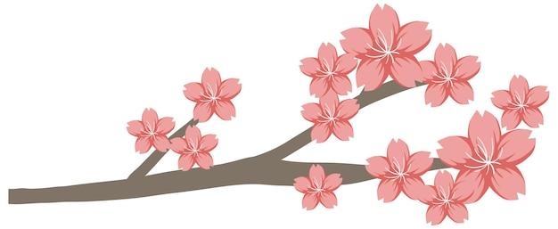 Kwiat wiśni lub gałąź sakura na białym tle