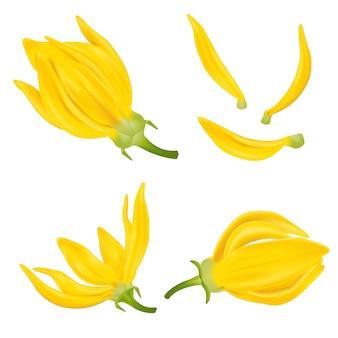 Kwiat ylang ylang. realistyczne elementy etykiet produktów kosmetycznych do pielęgnacji skóry. ilustracja