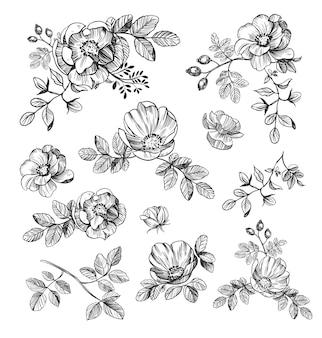 Kwiatowe ręcznie rysowane elementy. zestaw kwiatów. ilustracja wektorowa róży. czarny kontur