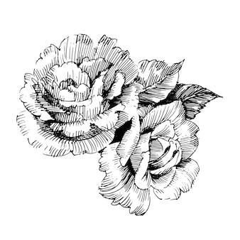 Kwiatowy kwiat botaniczny. ilustracja na białym tle
