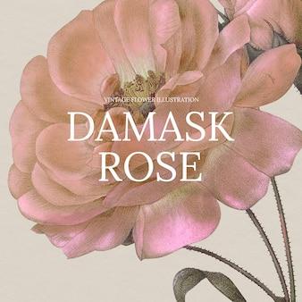Kwiatowy ręcznie rysowane szablon wektor z różą adamaszkową w tle, zremiksowany z dzieł z domeny publicznej