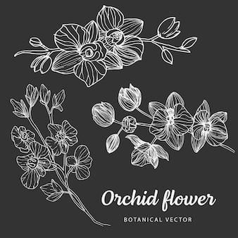 Kwiatowy szkic botaniki kolekcja monochromatycznych rysunków kwiatu orchidei z grafiką liniową