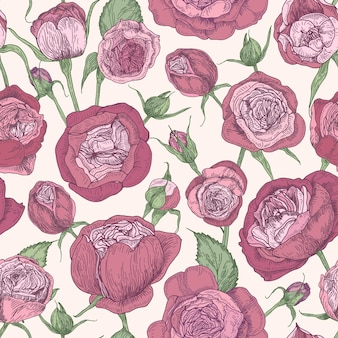 Kwiatowy wzór z kwitnących róż austin