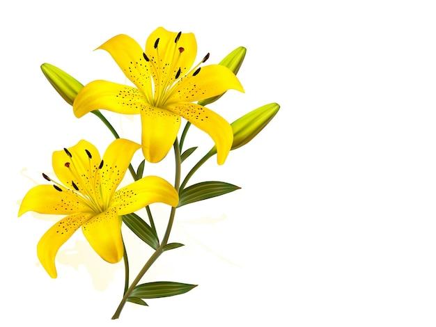 Kwiatu tło z żółtymi pięknymi lilii.