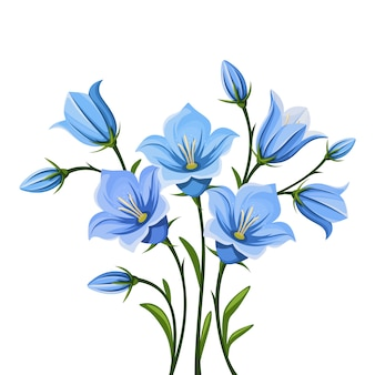 Kwiaty bluebell. ilustracja.