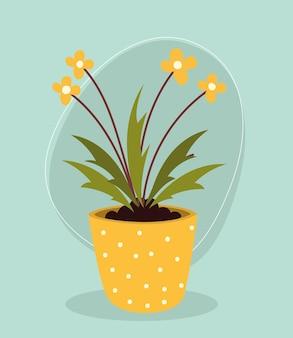 Kwiaty doniczkowe naturalne
