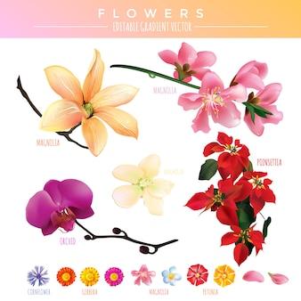 Kwiaty gradientu vector