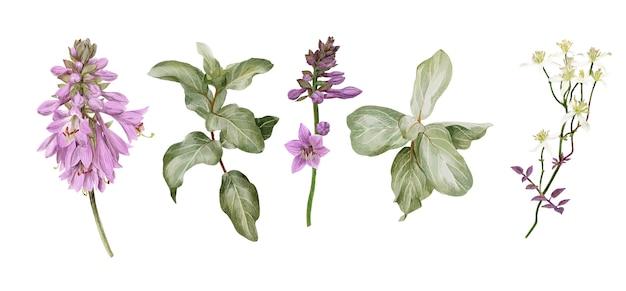 Kwiaty hosty, gałązki srebrzysty i powojnik biały