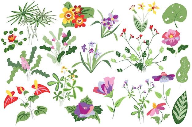Kwiaty i rośliny wyizolowany zestaw kwitnące i kwitnące polne kwiaty zieleń dzikie liście