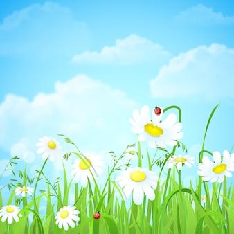 Kwiaty i trawa na polu
