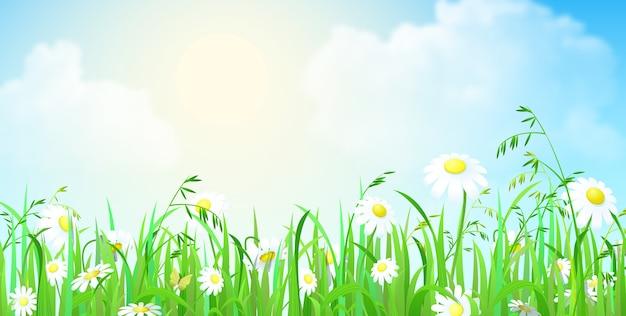 Kwiaty i trawa w polu niebo z chmurami w tle
