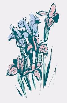 Kwiaty irysa