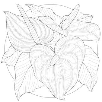 Kwiaty kalii.kolorowanka antystresowa dla dzieci i dorosłych. styl plątaniny zen. czarno-biały rysunek. rysowanie ręczne