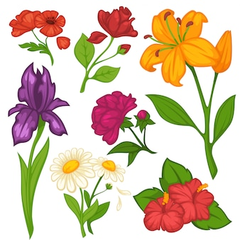 Kwiaty kwitnie wektor płaski zestaw ikon na białym tle