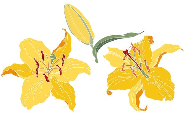 Kwiaty lilii orientalnej