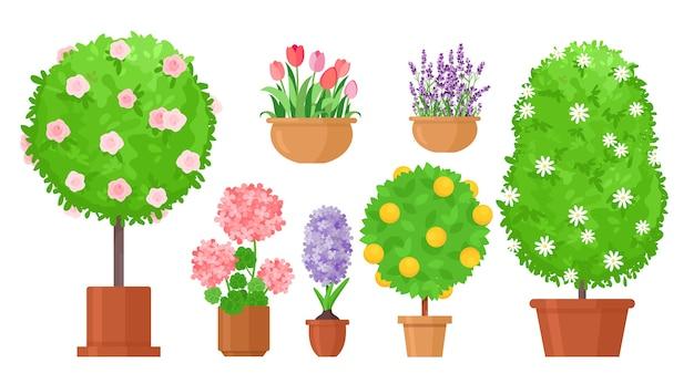 Kwiaty ogrodowe w doniczkach. róże krzewiaste, tulipany i kwietnik, drzewo owocowe. doniczkowy liliowy i lawendowy
