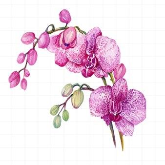 Kwiaty orchidei malowane akwarelą