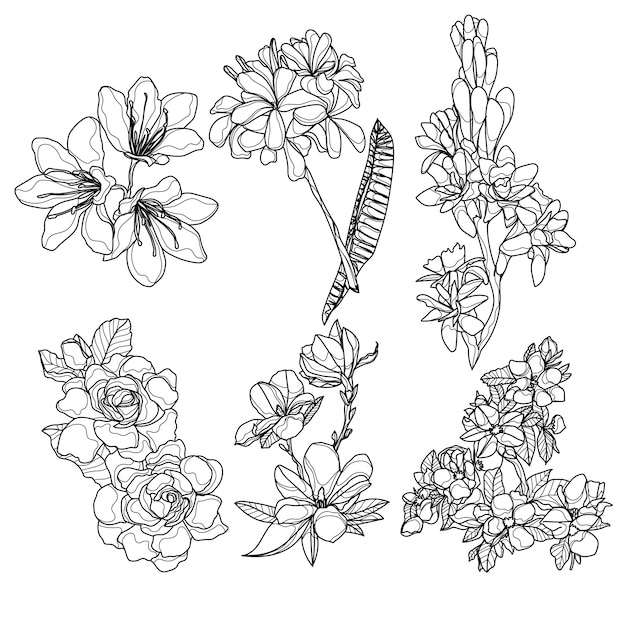 Kwiaty ręcznie rysunek i szkic czarno-biały