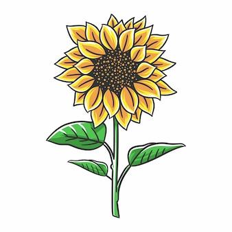 Kwiaty słonecznika z łodygami i liśćmi