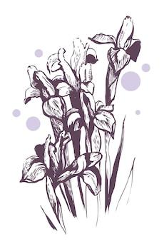 Kwiaty tęczówki. ręcznie rysowana ilustracja