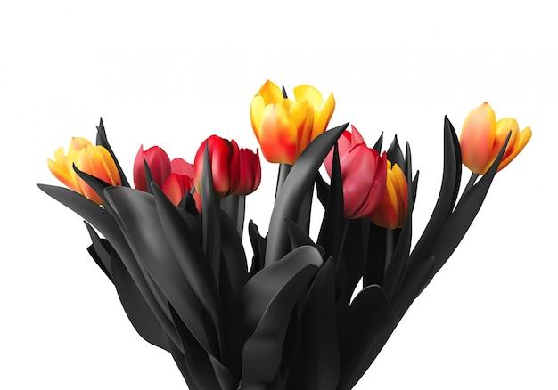 Kwiaty tulipanów, na białym tle