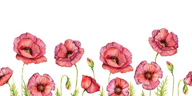 Kwiaty w akwarela mak. odosobniony. ręcznie malowane ilustracja. czerwone kwiaty